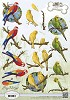34836 (1202) Amy Design - Animal Medley - Tropical Parrots (CD10539).