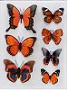 45663 3D Butterfly Stickers.